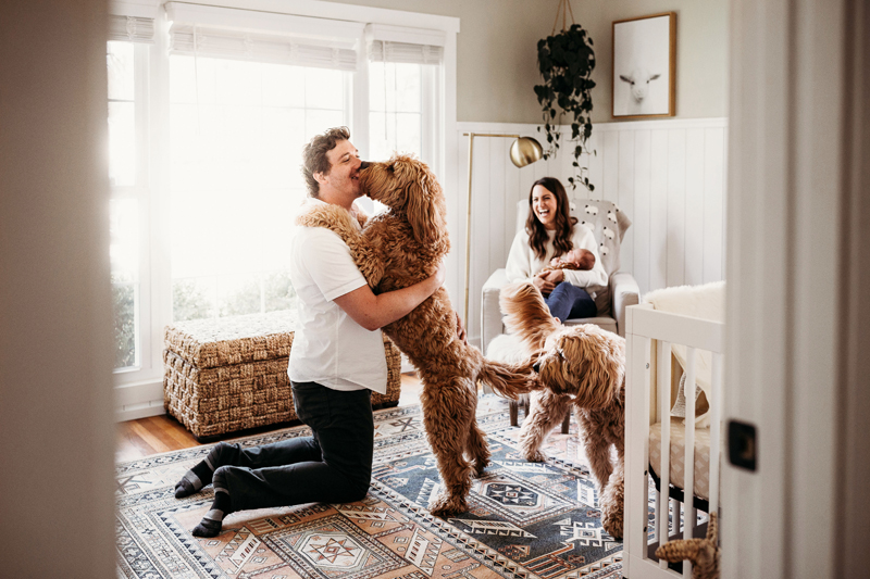 Newborn Photography, in a nursery a dog jumps up to kiss dad, another dog wanders and mom sits in a rocker with baby